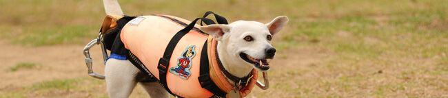 Anjing Penerjun Payung