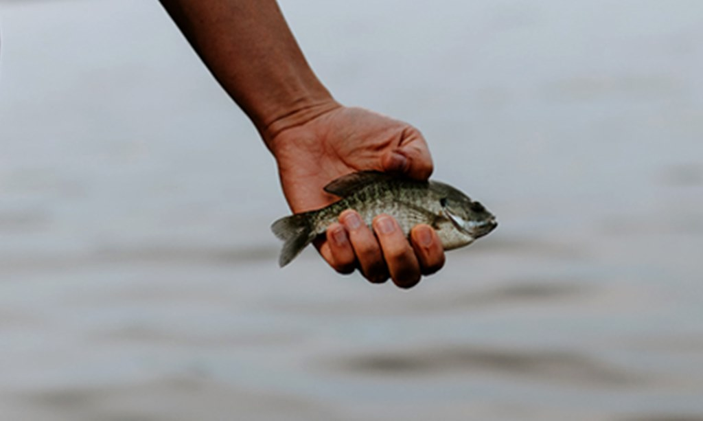 Ikan Kecil