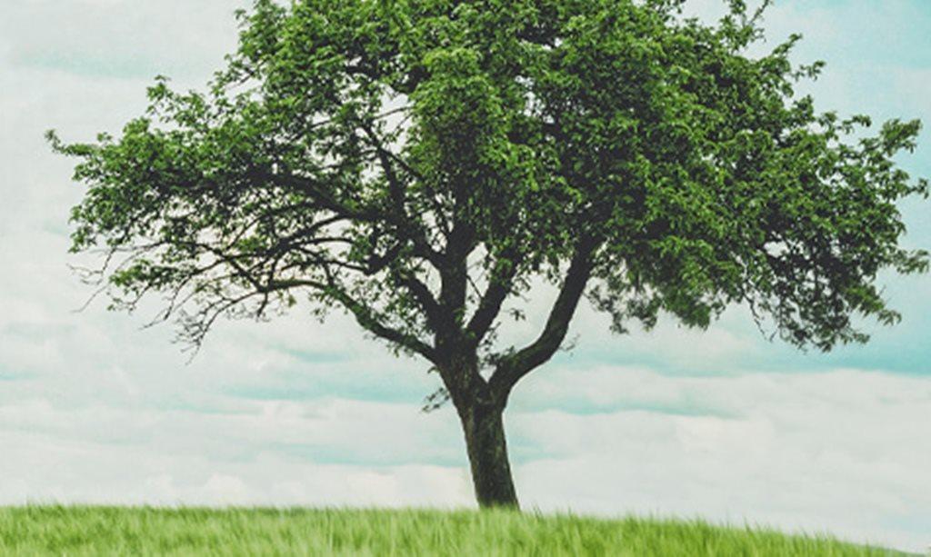 Pohon yang Menyembuhkan